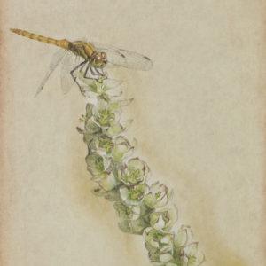 """岡本 東子 """"花がら"""" 2013"""